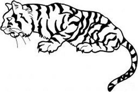 老虎的画法大全