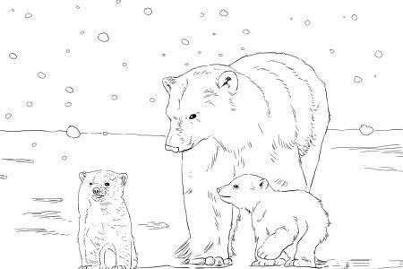 北极熊妈妈带着两只幼崽
