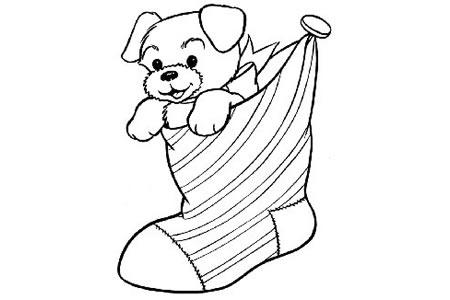 小狗在圣诞袜里