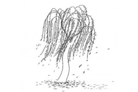 风吹柳树简笔画图片