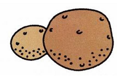 土豆简笔画画法