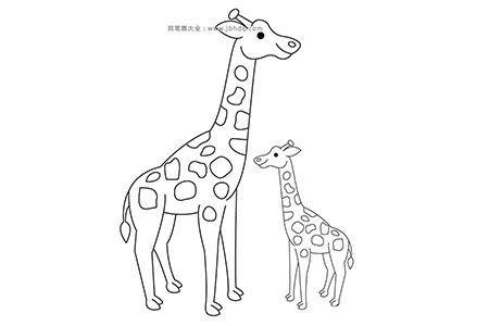 小长颈鹿和长颈鹿妈妈