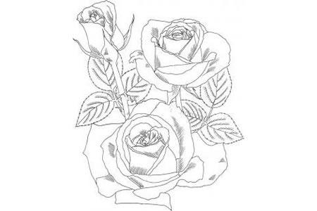 简单的玫瑰花画法大全