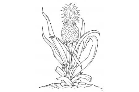树上的菠萝简笔画