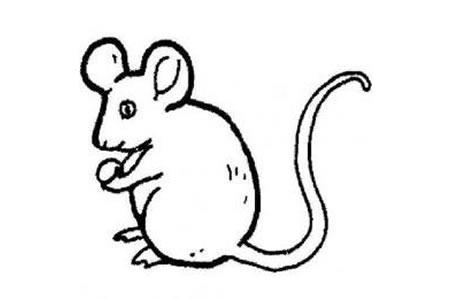机智小老鼠简笔画图片