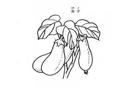 茄子简笔画图片