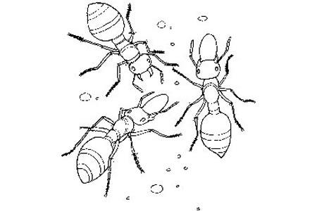 教小朋友画蚂蚁