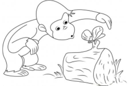 猴子和蝴蝶简笔画图片