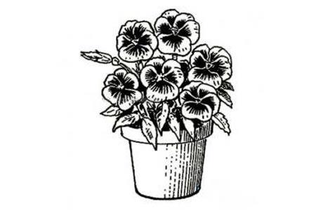 一盆漂亮的花简笔画