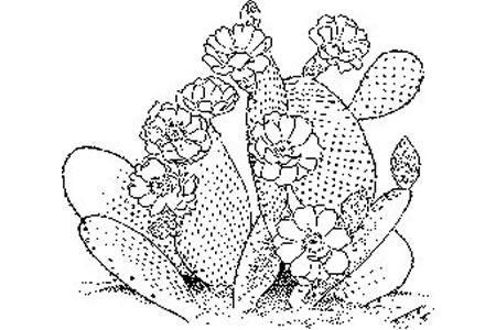 盛开花朵的仙人掌