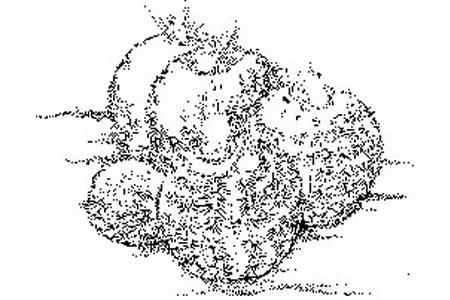 仙人球怎么画