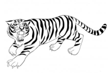 咆哮的老虎