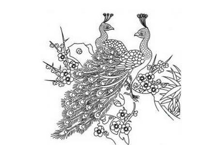 树枝上的孔雀简笔画图片