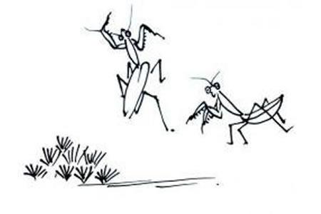 螳螂的简笔画画法