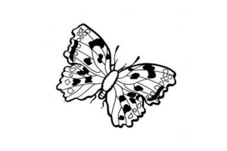 昆虫简笔画大全 美丽的蝴蝶简笔画