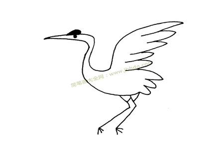 一组丹顶鹤简笔画图片