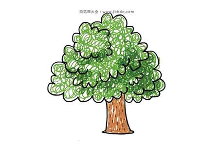茂盛树冠的大树