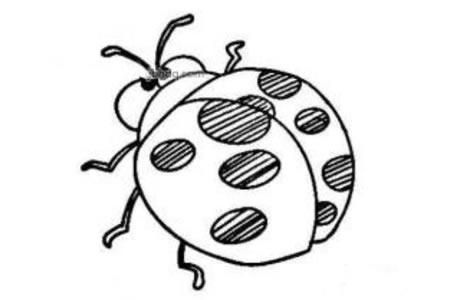 卡通七星瓢虫简笔画图片