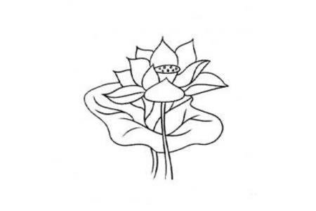花朵简笔画 荷花简笔画大全