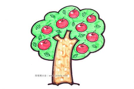 结满果实的苹果树