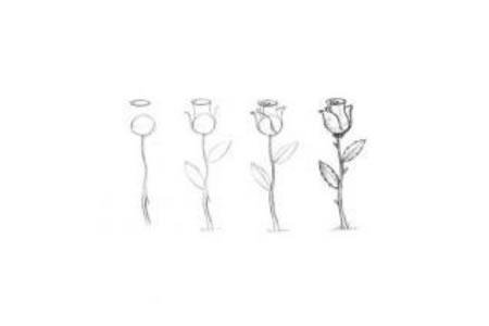 如何画玫瑰花