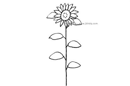 漂亮的向日葵简笔画教程