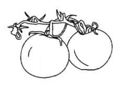 蔬菜简笔画大全 西红柿简笔画