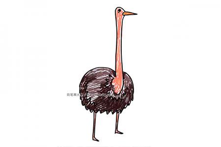 陆地野生动物 鸵鸟