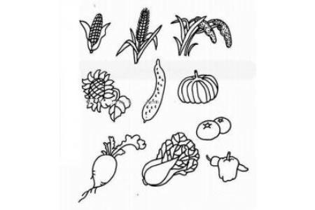 农作物简笔画图片