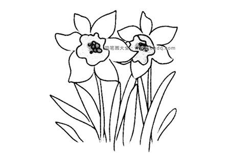 春天的花朵 水仙花