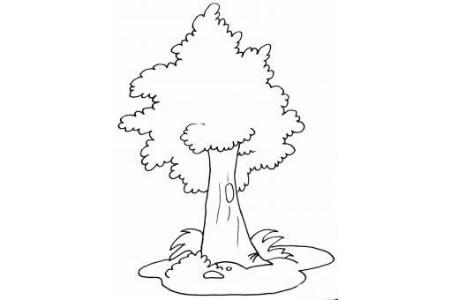 如何画大树 茂密的大树简笔画