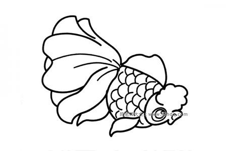 海洋动物一群鱼