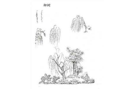 植物图片 柳树简笔画