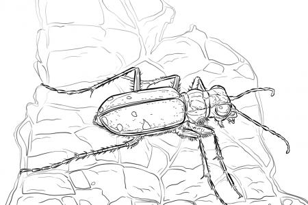 可怕的虎甲虫
