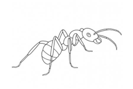 简单的蚂蚁画法