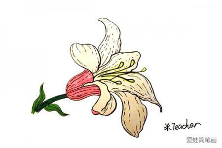 一朵百合花怎么画