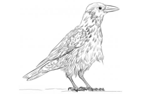 如何画一只乌鸦
