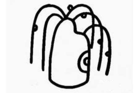 柳树的简笔画画法