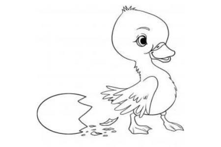 刚出生的小鸭子