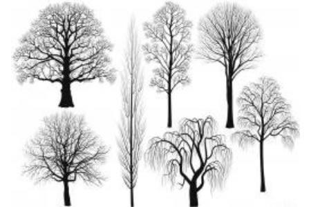 柳树简笔画的简单画法