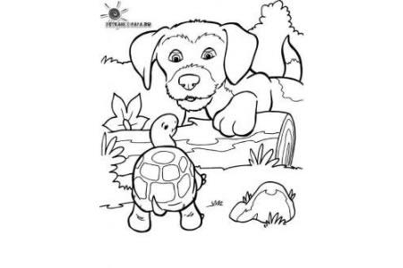 小狗和乌龟