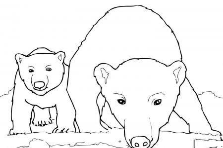 好奇的北极熊妈妈和宝宝