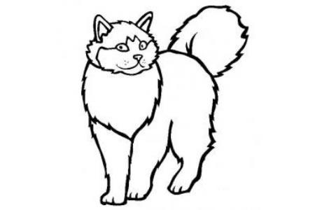 猫咪图片 简笔画布偶猫