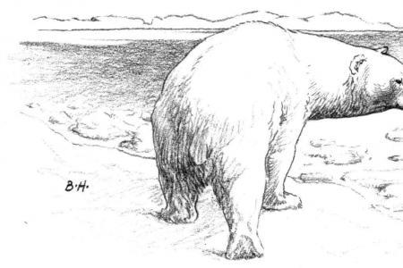 在冰面上的北极熊