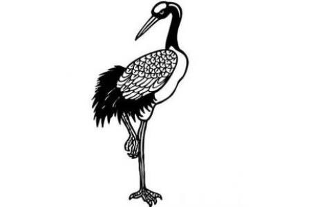 站立的丹顶鹤