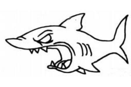 凶猛的鲨鱼