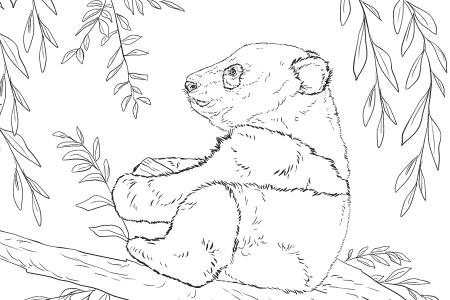 熊猫宝宝坐在树上