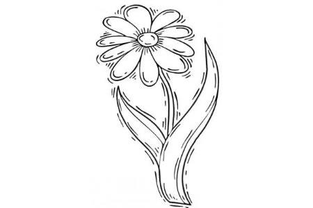 简单的菊花画法