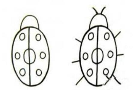 瓢虫的习性