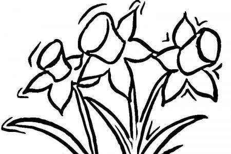花盆里的水仙花